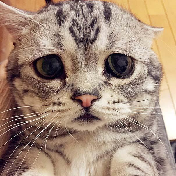 Luhu, ίσως η πιο λυπημένη γάτα στον κόσμο (12)