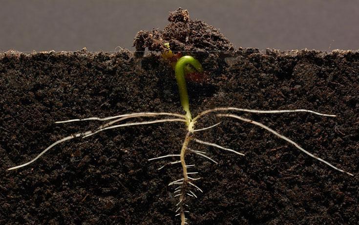 Παρακολουθώντας τα φυτά να μεγαλώνουν - ένα καθηλωτικό θέαμα