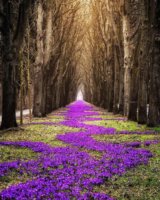 Ανοιξιάτικο μονοπάτι ανάμεσα στα δέντρα | Φωτογραφία της ημέρας