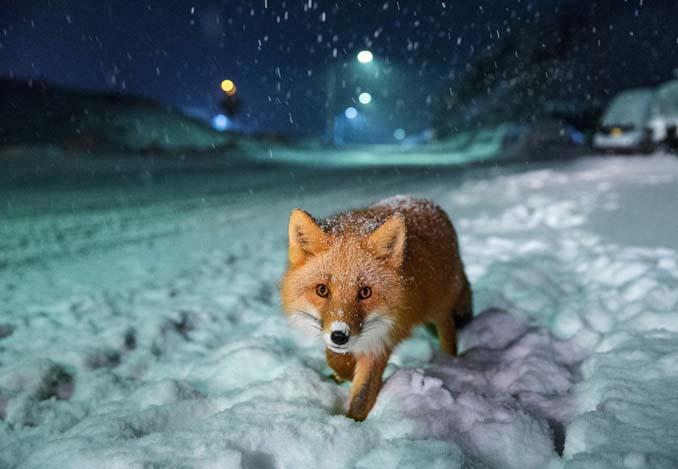 Φωτογραφίες που ξεχώρισαν στον διαγωνισμό Sony World Photography Awards 2018 (7)