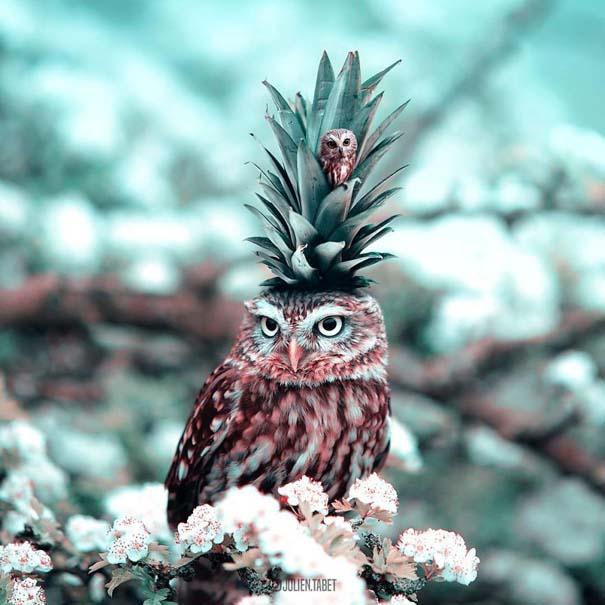 Γάλλος καλλιτέχνης δημιουργεί σουρεαλιστικές εικόνες ζώων με το Photoshop (7)
