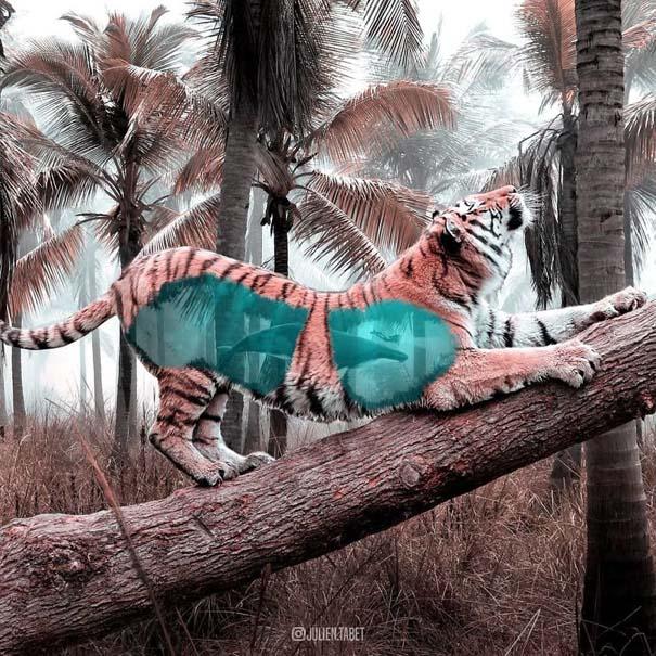 Γάλλος καλλιτέχνης δημιουργεί σουρεαλιστικές εικόνες ζώων με το Photoshop (14)