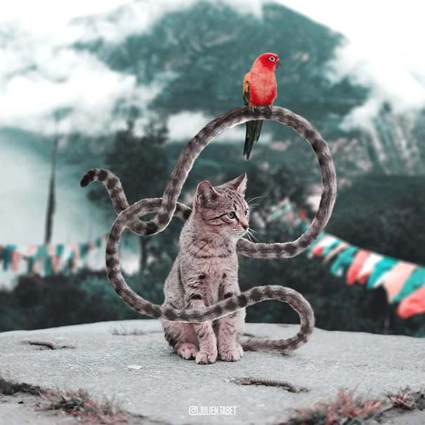 Γάλλος καλλιτέχνης δημιουργεί σουρεαλιστικές εικόνες ζώων με το Photoshop (16)