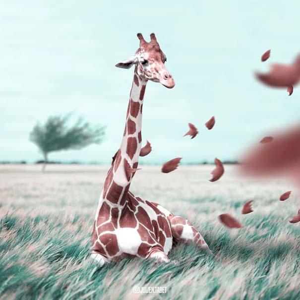 Γάλλος καλλιτέχνης δημιουργεί σουρεαλιστικές εικόνες ζώων με το Photoshop (21)