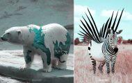 Γάλλος καλλιτέχνης δημιουργεί σουρεαλιστικές εικόνες ζώων με το Photoshop (25)