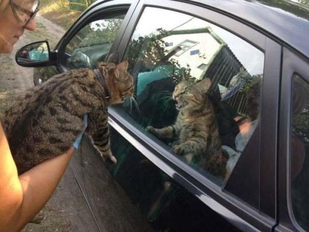 Γάτες που... κάνουν τα δικά τους! #88 (3)