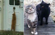 Γάτες που... κάνουν τα δικά τους! #88 (10)