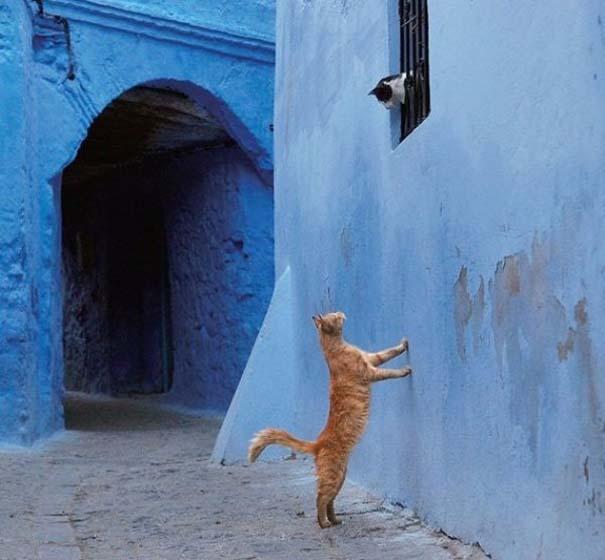 Γάτες που... κάνουν τα δικά τους! #88 (5)
