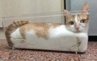 Γάτες που... κάνουν τα δικά τους! #89 (1)