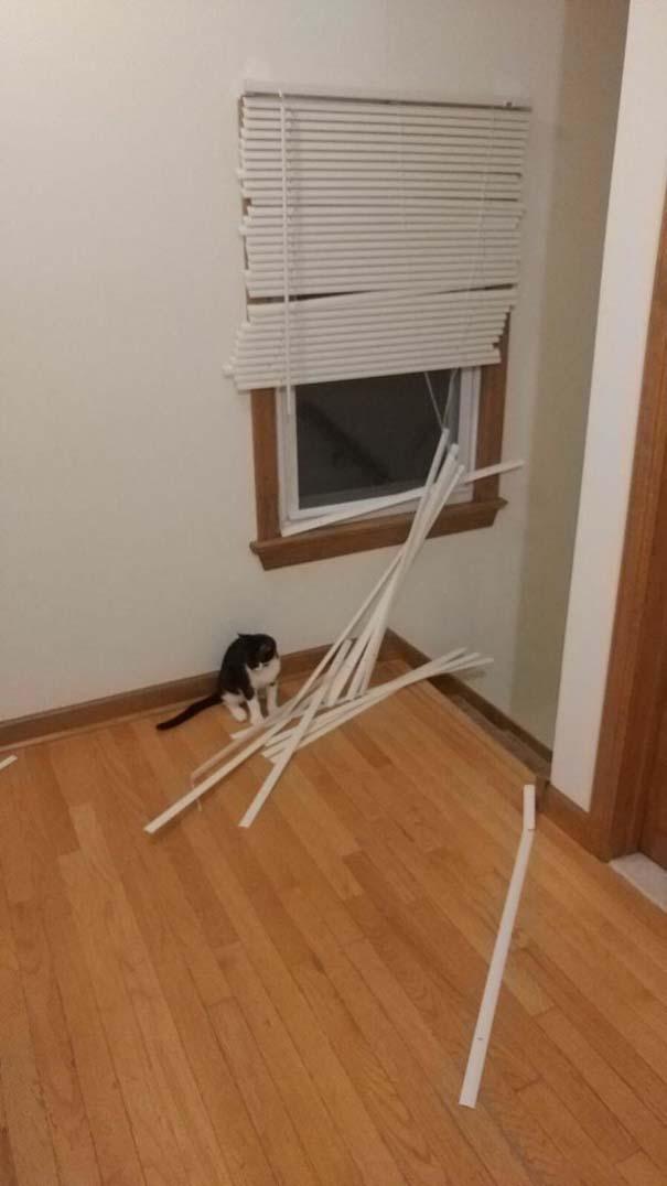 Γάτες που... κάνουν τα δικά τους! #90 (7)