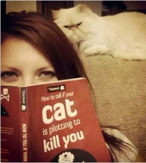 Γάτες που... κάνουν τα δικά τους! #90 (8)