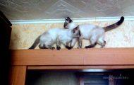 Οι γάτες πάντα βρίσκουν τον τρόπο...