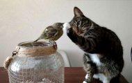 Γάτες που δίνουν ρεσιτάλ τρέλας