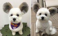 Αυτό το κουτάβι έχει τα αυτιά του Mickey Mouse
