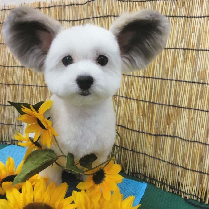 Αυτό το κουτάβι έχει τα αυτιά του Mickey Mouse (4)