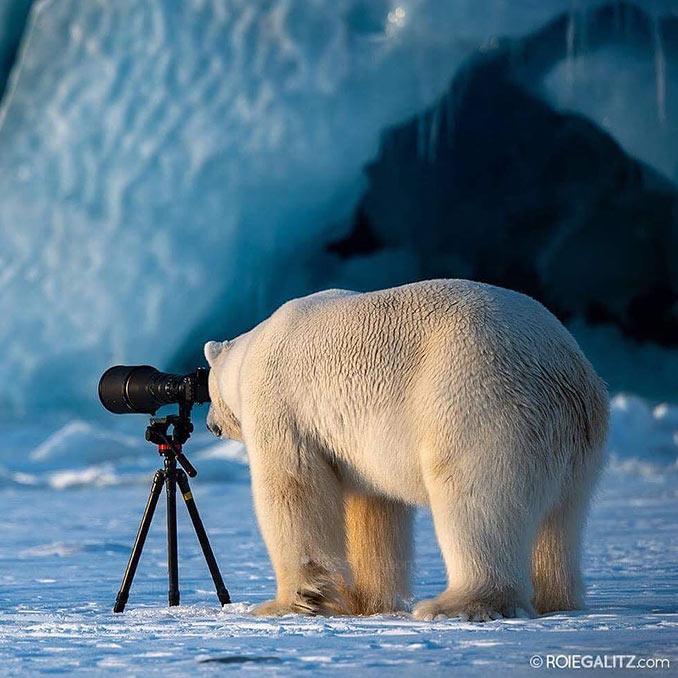 Η πολική αρκούδα βρήκε νέο χόμπι | Φωτογραφία της ημέρας