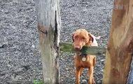 Σκύλοι πρωταγωνιστούν σε απίστευτα Fails