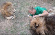 Αγκαλίτσες με τον βασιλιά της ζούγκλας