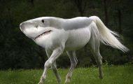 Καλλιτέχνης δημιουργεί τις πιο εξωπραγματικές διασταυρώσεις ζώων με το Photoshop (20)