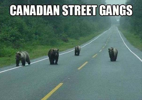 Εν τω μεταξύ, στον Καναδά... #51 (4)