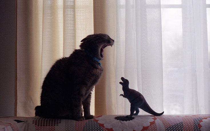 Γάτες που... κάνουν τα δικά τους! #92 (1)