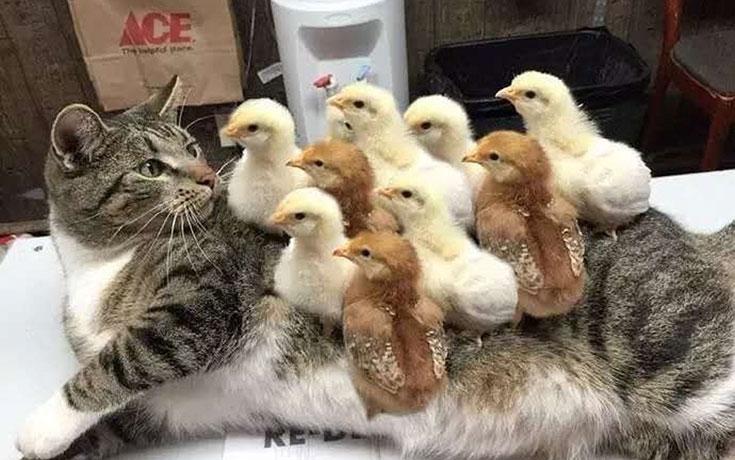 Γάτες που... κάνουν τα δικά τους! #94 (1)
