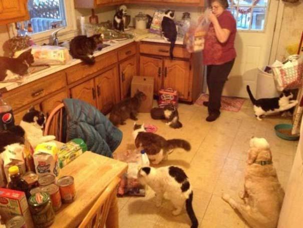 Γάτες που... κάνουν τα δικά τους! #92 (2)