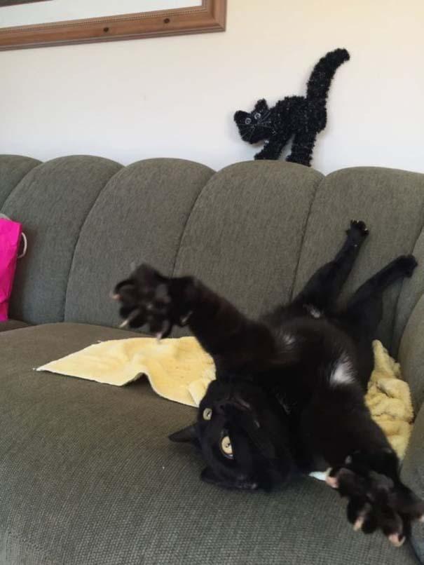 Γάτες που... κάνουν τα δικά τους! #92 (3)
