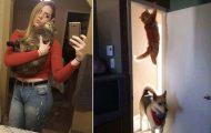 Γάτες που... κάνουν τα δικά τους! #91 (10)