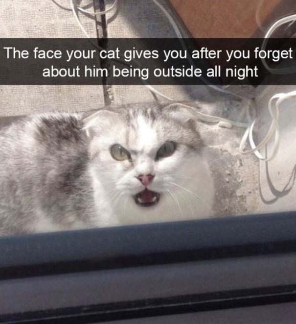 Γάτες που... κάνουν τα δικά τους! #92 (6)