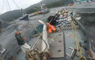 Ναυμαχία ανάμεσα σε αλιευτικά σκάφη