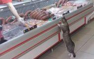 Όταν μια γάτα επισκέφθηκε το κρεοπωλείο...