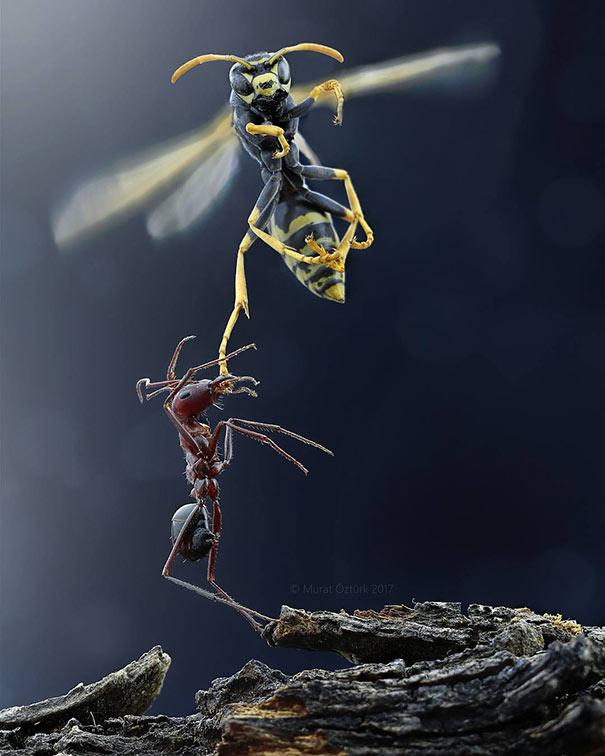 Το μυρμήγκι και η σφήκα | Φωτογραφία της ημέρας
