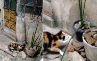 Ποντίκι ξεφεύγει από γάτα με κίνηση Ninja