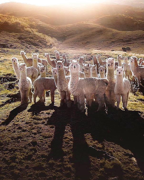 Περουβιανή συμμορία | Φωτογραφία της ημέρας