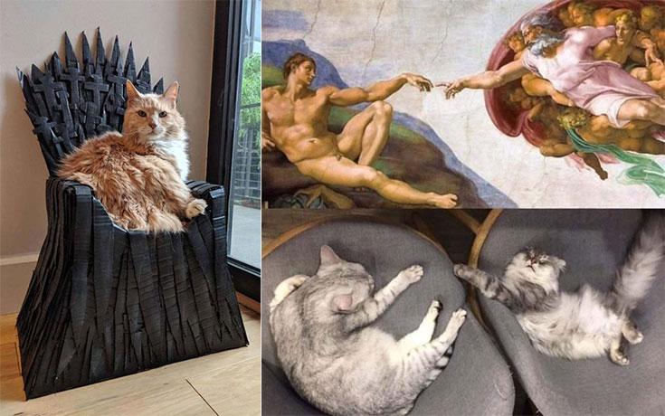 Γάτες που… κάνουν τα δικά τους! #145
